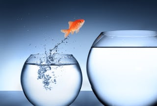 10-Hardest-Life-Fish-Bowl-9N5giq.jpg